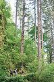 Horsetail Falls Hike, Columbia Gorge - Anna Del Savio.jpg