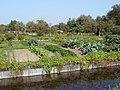 Hortillonnages d'Amiens Jardins maraîchers 190908 01.jpg