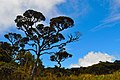 Horton plains 12.jpg