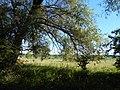Hulyaihorodok, Cherkas'ka oblast, Ukraine, 20740 - panoramio (5).jpg