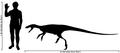 Human-staurikosaurus size comparison.png