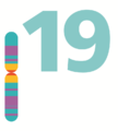 Human chromosome 19 from Gene Gateway - no label.png