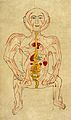 Human figure showing arteries and viscera, Persian, 18th C Wellcome L0031822.jpg