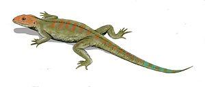 Hylonomus - Life restoration