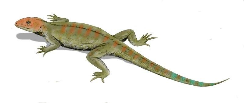 Hylonomus BW
