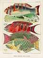 Illustration from The Great Barrier Reef of Australia (1893) by William Saville-Kent from rawpixel's own original publication 00016.jpg