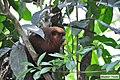 In The Peruvian Amazon (232412947).jpeg