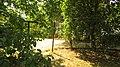 In the yard. August 2014. - Во дворе. Август 2014. - panoramio.jpg