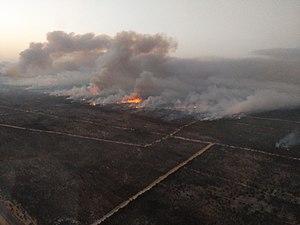 Incendio Parque Doñana 2017 (1).jpg