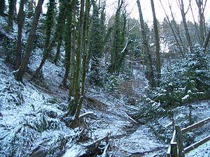 Interlaken Park (Seattle) - A rare snow day in Interlaken Park
