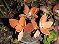 "Iran-qom-Cactus-The greenhouse of the thorn world گلخانه کاکتوس ""دنیای خار"" در روستای مبارک آباد قم- ایران 35.jpg"