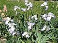 Iris ger roz St-Nico (71) - 2.jpg