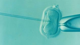 consigli per giovani coppie separate fertilizacion donna single