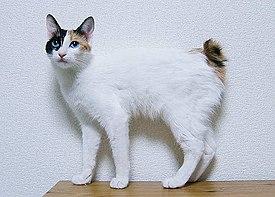 Japanese Bobtail - Simple English Wikipedia, the free ...