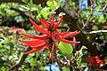 Jardim Botânico Tropical (44651036622).jpg