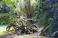 Jardim Botânico Tropical - Lisbon, Portugal - DSC06598.JPG