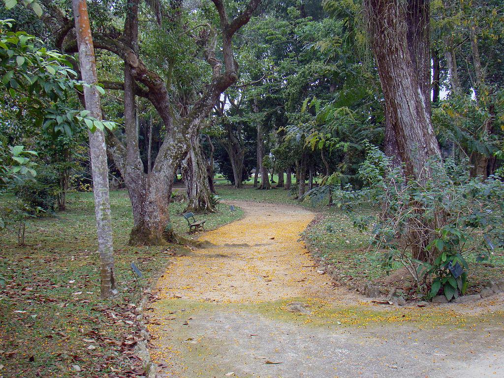 jardim vertical rio de janeiro:Ficheiro:Jardim Botânico do Rio de Janeiro.jpg – Wikipédia, a