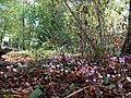 Jardin Alexis Jordan Villeurbanne 4.jpg
