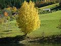 Jesen - panoramio - Mandic Milan.jpg
