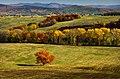 Jesenný dub - panoramio.jpg