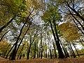 Jesień w Parku Wrocławskim w Lubinie.jpg
