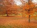 John A. Finch Arboretum - IMG 6934.JPG