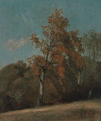 Study of an Ash Tree