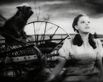 Musical selections in The Wizard of Oz - The Wizard of Oz star Judy Garland, (pictured right with cairn terrier Terry) singing hit Over the Rainbow