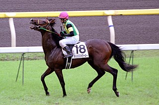 Jungle Pocket Japanese Thoroughbred racehorse and sire