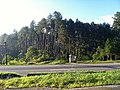 Juquitiba - SP - panoramio (5).jpg