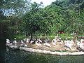 Jurong BirdPark 200.JPG