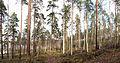 Jyväskylä - forest in Nisula.jpg