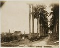 KITLV - 39051 - Muller, Julius Eduard - Paramaribo - Former plantation Alkmaar at the Commewijne River in Surinam - circa 1885.tif