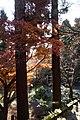 Kamakura - panoramio - AwOiSoAk KaOsIoWa (32).jpg
