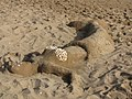 Kamelya beach - panoramio (1).jpg