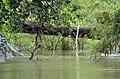Kandhanpara Waterfalls, Wayanad - panoramio (3).jpg