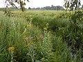Kanivs'kyi district, Cherkas'ka oblast, Ukraine - panoramio (200).jpg