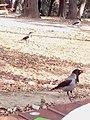 Karga-yildiz-parki 20140208 150312.jpg