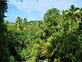 Karibik, St. Kitts - View from Romney manor - panoramio.jpg