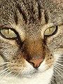 Kat - Katze - Cat - Chat - panoramio - Hänsel und Gretel (3).jpg