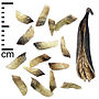 Katsura tree seeds and fruit, Alnarp.jpg
