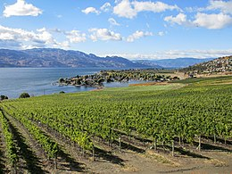 Vineyards of the central Okanagan Valley