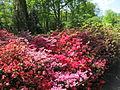 Keukenhof Garden (34).JPG