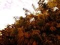 Kifisia, Greece - panoramio (18).jpg