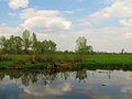 Kilnyshche lake Muromets3.JPG