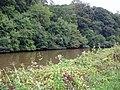 Kingsley - Hatton's Hey Wood across the River Weaver - geograph.org.uk - 250870.jpg