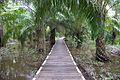 Klias Wetlands Pathway to the Garama Village Base Camp 01.jpg