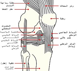 Diagram of the right knee