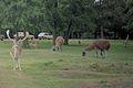 Knowsley Safari Park, Prescot - panoramio.jpg