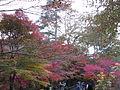 Kobe Municipal Arboretum in 2013-11-16 No,20.JPG